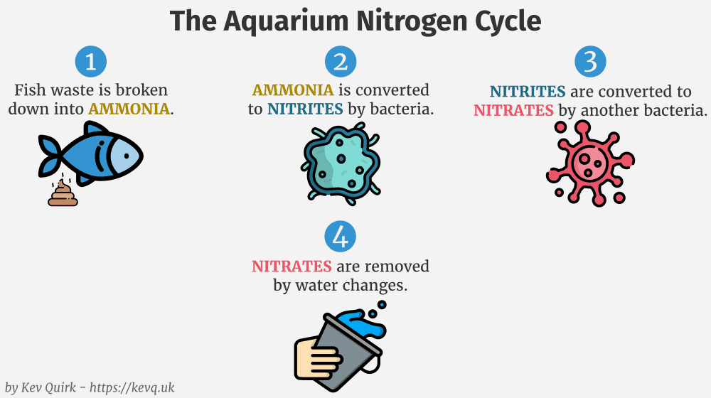 Traditional nitrogen cycle