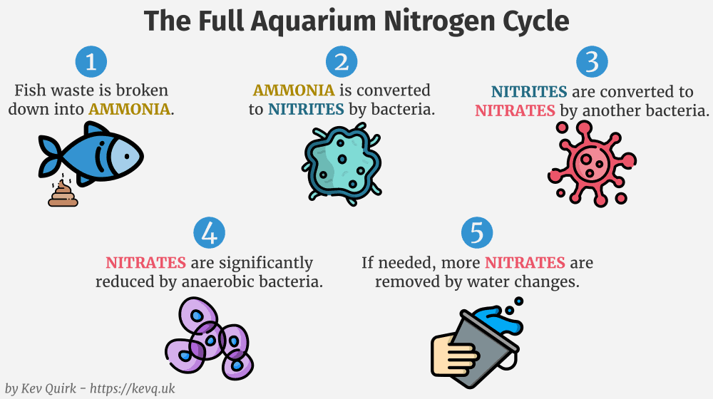 full nitrogen cycle